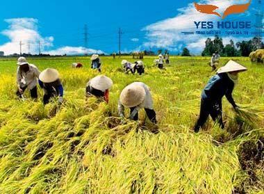 Quyền sử dụng đất nông nghiệp -Yeshouse
