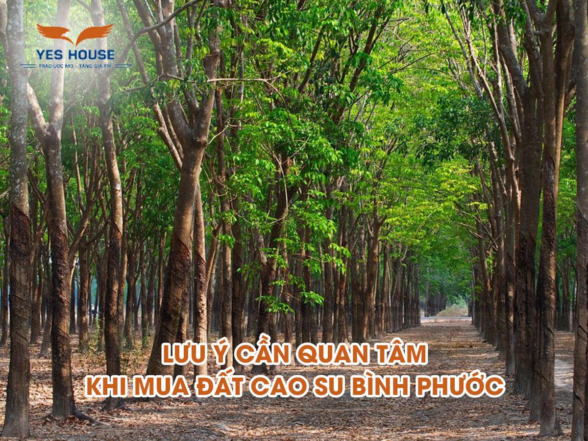 đất cao su Bình Phước