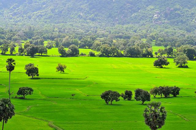 Đất nông nghiệp có thể chuyển sang đất thổ cư nếu đáp ứng đủ điều kiện
