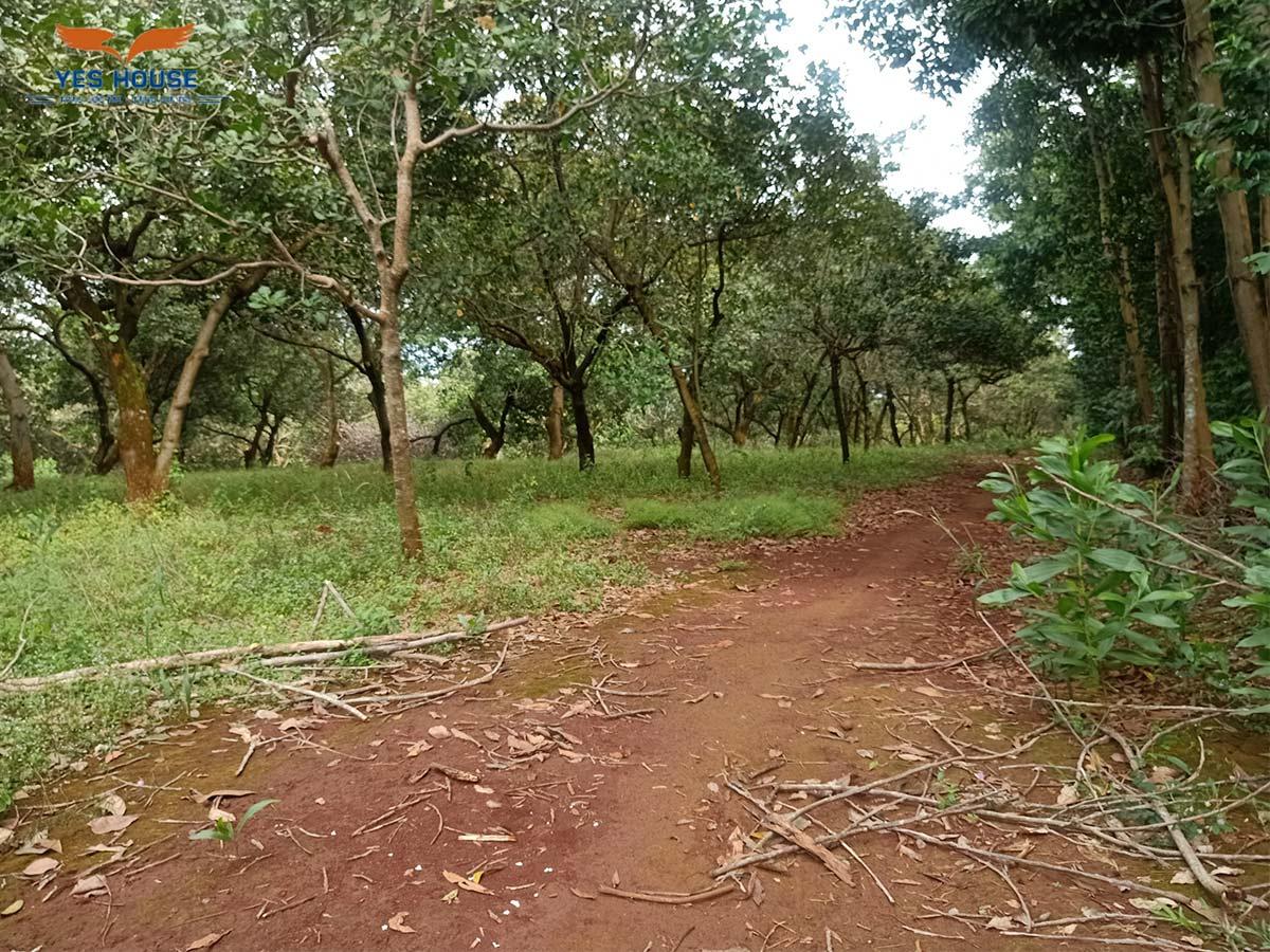 đất vườn Bình Phước