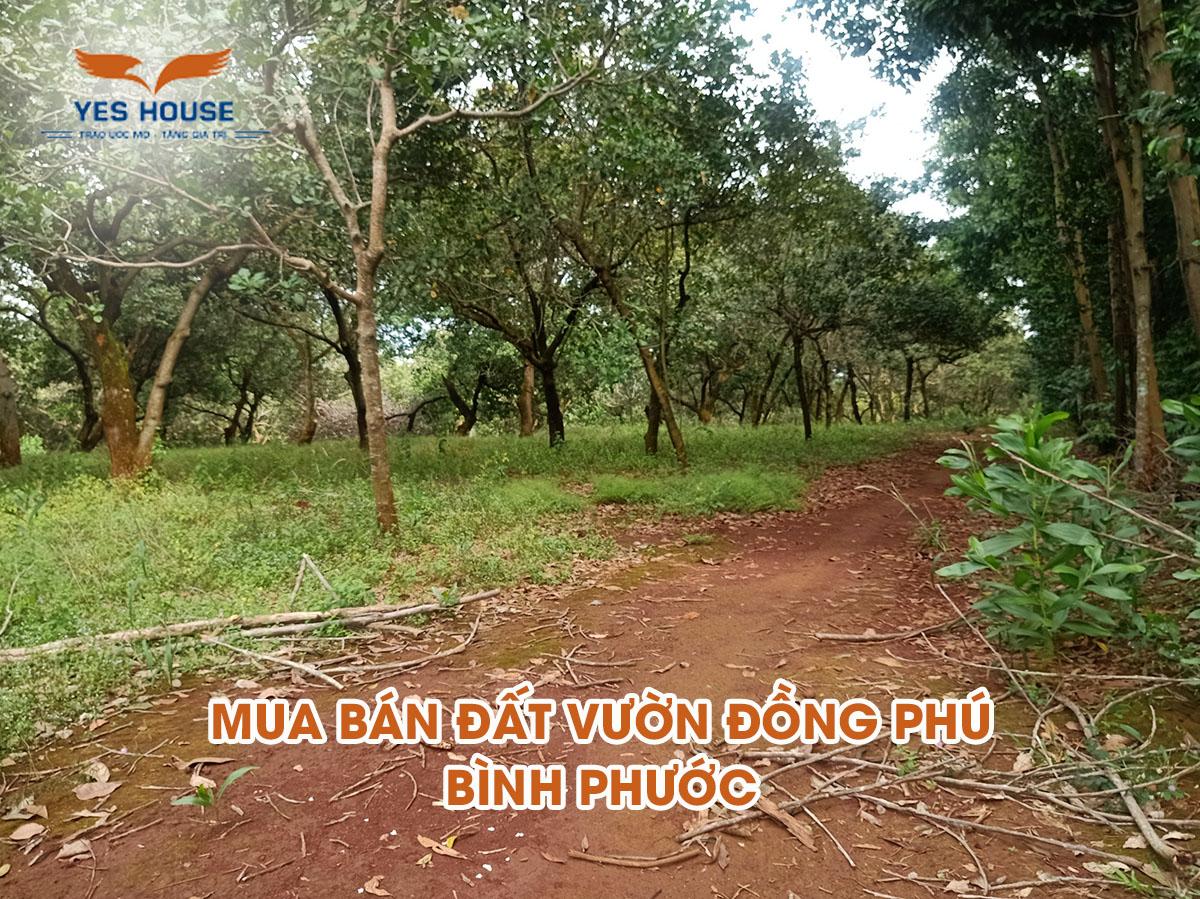 đất vườn Đồng Phú Bình Phước