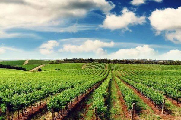 Quy định về sử dụng đất dùng cho kinh tế trang trại - yeshouse